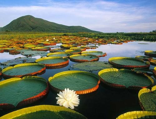 Brazilia, Pantalal – A világ legnagyobb lápja